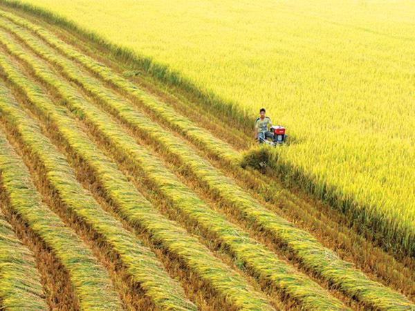 xuất khẩu lúa gạo, mở rộng hạn điền, tái cơ cấu kinh tế, TS Đặng Kim Sơn