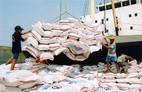 """Gạo xuất khẩu của Việt Nam: Châu Phi còn """"lắc đầu"""""""