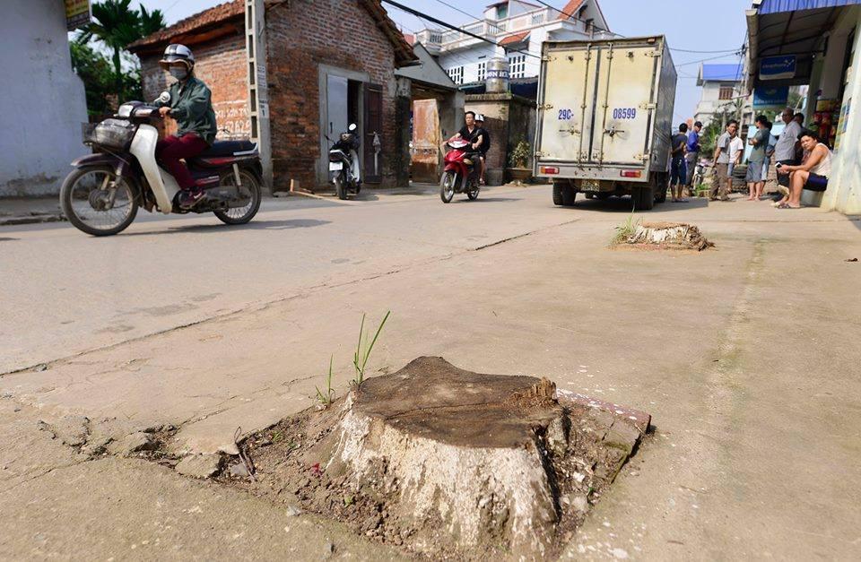 Hà Nội họp gấp vụ quan xã chặt cây xanh