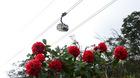 Lễ hội hoa đỗ quyên độc đáo trên đỉnh Fansipan