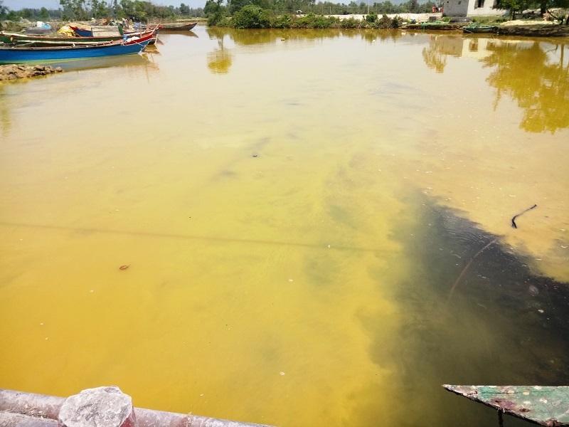 Xuất hiện dải nước màu vàng tại cảng Chân Mây