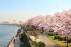 Khám phá những lễ hội xuân đặc sắc nhất tại Nhật Bản