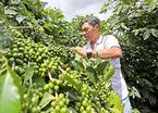 Bán cà phê cho Starbucks và mê làm giàu từ nghề nông