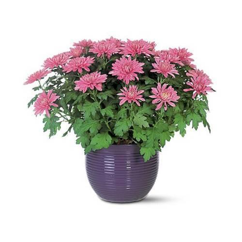 trồng cây cảnh trong nhà, những loại cây cảnh giúp thanh lọc không khí