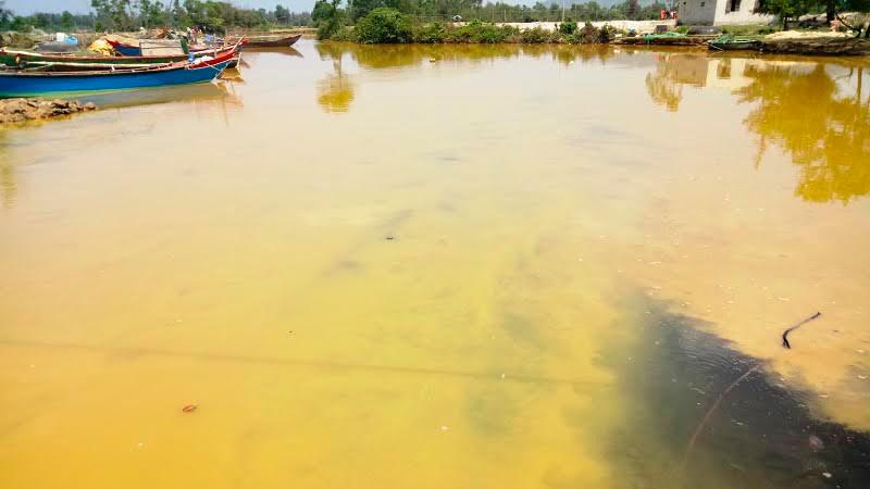 cá chết, dải nước màu vàng, cảng Chân Mây