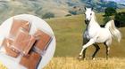Cao xương ngựa trị suy nhược cơ thể