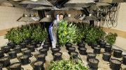 Số phận trẻ em Việt bị ép làm nô lệ trồng cần sa ở Anh