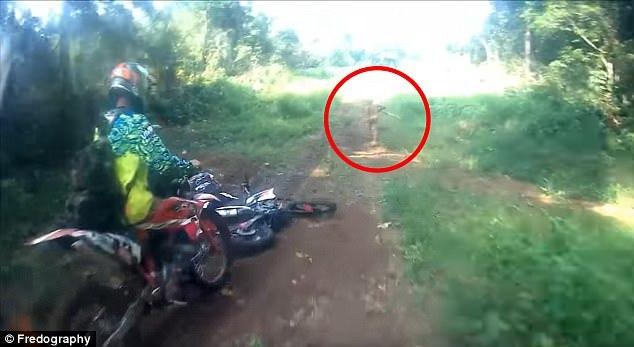 Người lùn bí ẩn bỏ chạy trong rừng