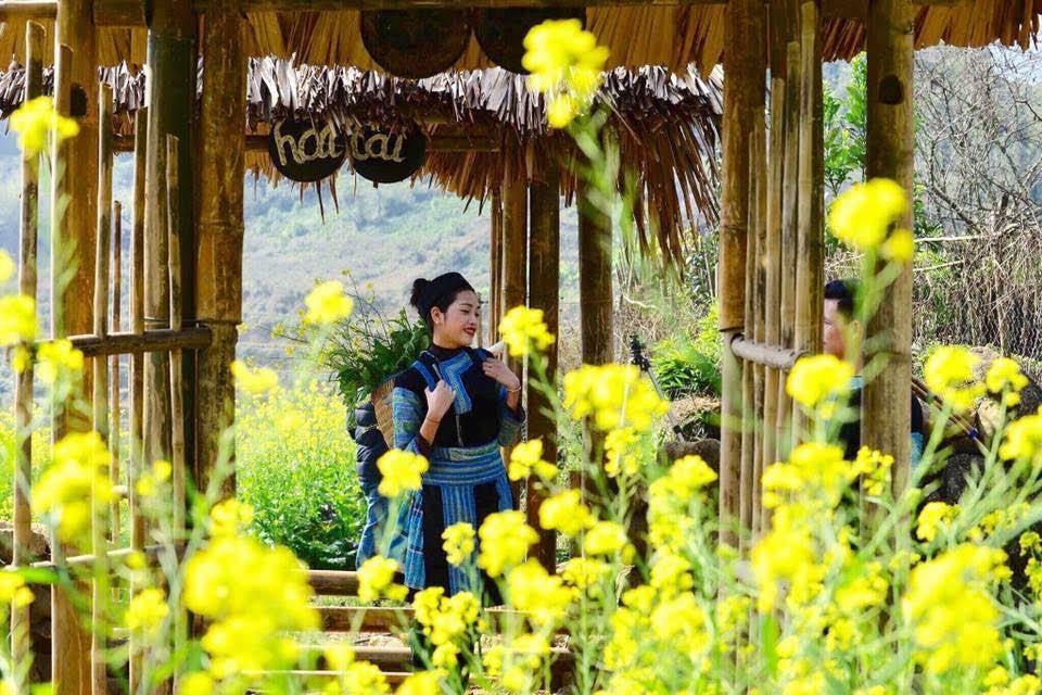 Cánh đồng hoa cải vàng ở bản Cát Cát thu hút du khách đến Sa Pa