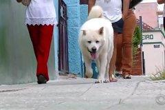 Chú chó trung thành khiến ai gặp cũng ngưỡng mộ