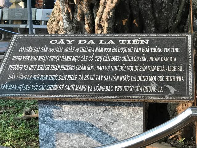 Cây đa 200 tuổi: Chứng nhân những cuộc thảm sát bi thương