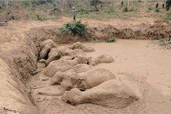 Xem bầy voi thoát khỏi vũng bùn một cách ngoạn mục