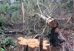 Bắt giám đốc, phó giám đốc để mất hàng nghìn ha rừng