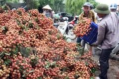 Bộ trưởng Bộ NN-PTNT: Vào vụ thu hoạch… cứ phải bán tống bán tháo