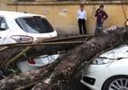 Hà Nội: Mưa lốc lớn, cây đổ đè bẹp ô tô