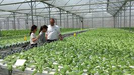 Mở rộng hạn điền: Từ làm ruộng sang kinh doanh nông nghiệp