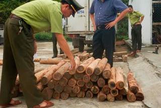 Quảng Bình: Bắt giữ 100 khúc gỗ hương giáng 'trừ tà'