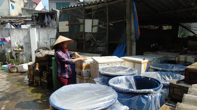 Khốn khổ vì hàng trăm tấn 'xác sứa' sau sự cố Formosa