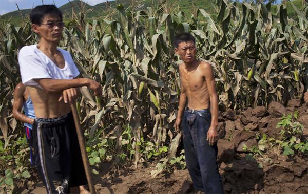 LHQ, sự thật, Triều Tiên, thiếu đói