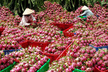 Mở rộng hạn điền: 'Đường băng' cho thương hiệu nông sản Việt