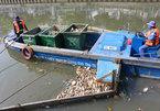 Cá chết hàng loạt trên kênh Nhiêu Lộc - Thị Nghè