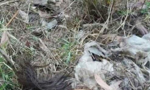 Phát hiện xác người trong bao nilon ở khu du lịch bỏ hoang
