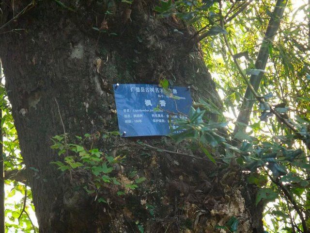 Khám phá rừng lá phong tuyệt đẹp ngay tại Việt Nam