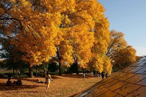 Rừng lá phong, Du lịch Việt Nam, Cảnh đẹp, Mùa thu