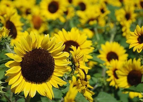 Đây là 12 loại hoa rực rỡ bạn nên trồng trong nhà vào mùa hè
