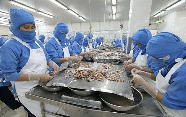Cua đồng quê khan hiếm, ăn con tôm hùm Canada 6 kg