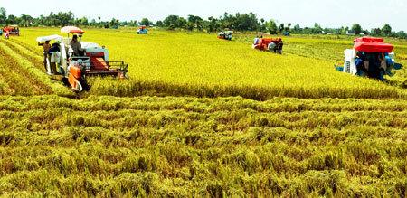 Tích tụ ruộng đất để tháo gỡ cho nông nghiệp