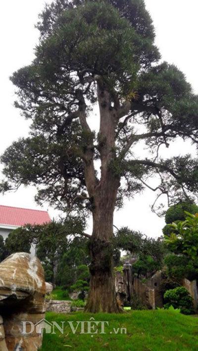 Độc nhất vô nhị, hòn non bộ, đại gia xứ nghệ, cây cảnh, bonsai