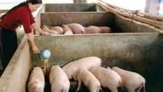 Kỷ lục 30 năm: 1kg thịt lợn không mua nổi cân táo Tàu
