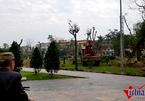 Vì sao Thái Bình xóa sổ cây trăm tuổi ở vườn hoa trung tâm?