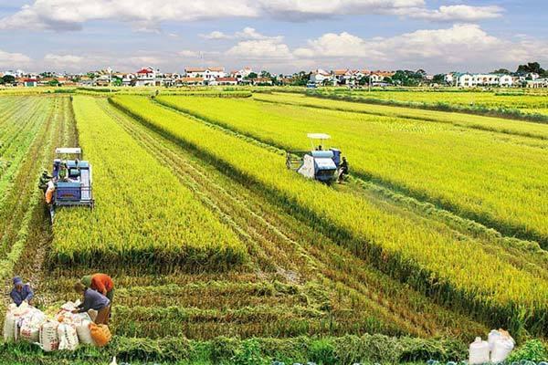 Nông nghiệp, nông nghiệp công nghệ cao, an toàn vệ sinh thực phẩm, thực phẩm bẩn, nông sản