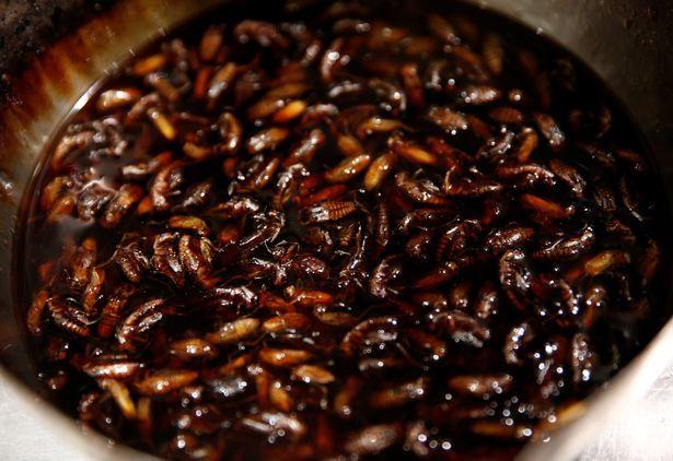 Đáng sợ mỳ trộn côn trùng trong nhà hàng sang trọng