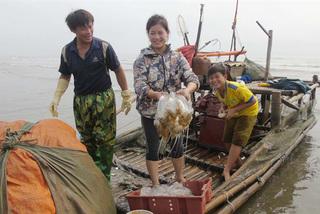 Vớt 'vàng trắng', dân xứ Nghệ thu 100 tỷ