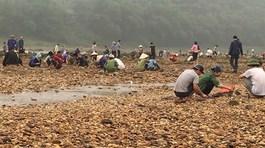 Phú Thọ: Dân đổ xô ra sông đãi tìm đá quý
