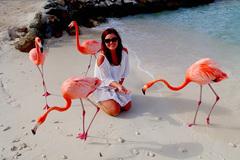 Bãi biển hút khách nhờ bầy chim hồng hạc thân thiện