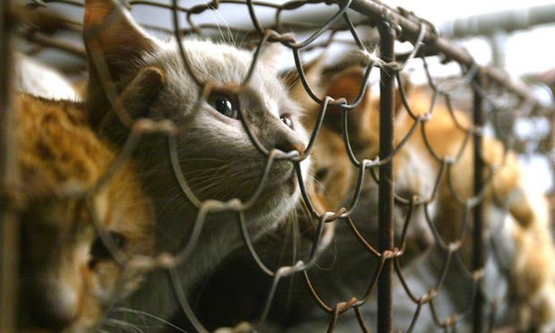 Giết chó ăn thịt bị phạt gần 200 triệu