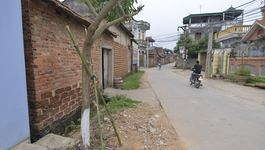 Hà Nội: Quan xã chặt cây xanh phải trồng lại