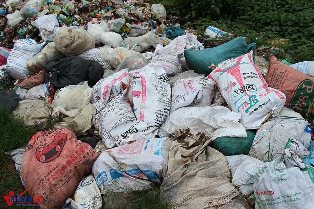 xác lợn, xác lợn chết, ô nhiễm môi trường, Hà Nam