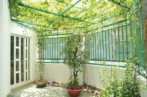 cách làm mát nhà mùa hè, điều hòa nhiệt độ, trồng cây xanh trong nhà