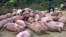 Cảnh báo lợn chết thành đặc sản, nhậu vui phế phẩm toàn cầu