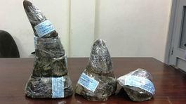 Phá vụ buôn sừng tê giác 'khủng' trị giá 6 tỷ qua đường hàng không