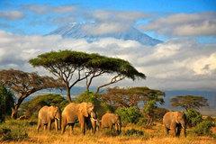 Học bổng tham quan, giao lưu 3 tuần ở Tanzania