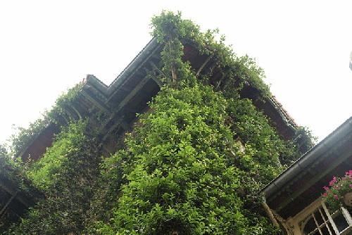 nhà đẹp, trang trí nhà, trang trí nhà với cây xanh