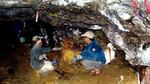 Vào hang mót vàng, mỗi ngày gom được 1 cây
