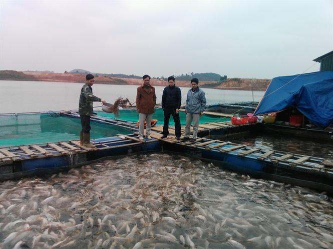 vựa cá, cá tầm, cá diêu hồng, nuôi cá, ngư dân