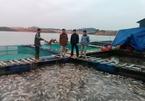 Điều ít biết về vựa cá khổng lồ ở Tây Bắc